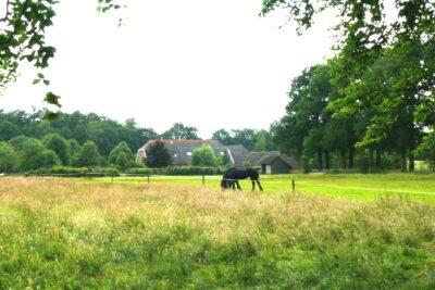 Vakantieboerderij Woudenberg - 22 personen - Utrecht - Woudenberg afbeelding